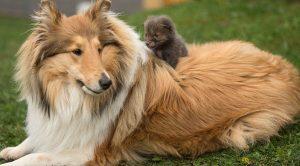 Terrier Köpek Eğitimi