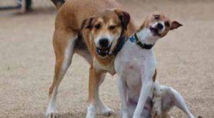 Köpek Eğitim Parkuru