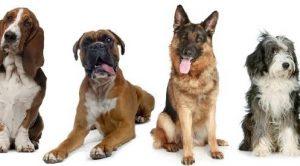 Yeniköy Köpek Eğitimi