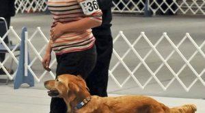 Schnauzer Köpek Eğitimi