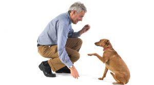 Şaşkınbakkal Köpek Eğitimi