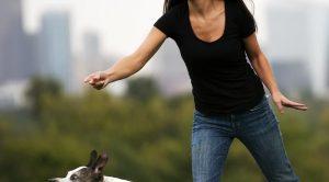 Teşvikiye Köpek Eğitimi