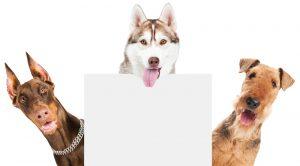 Sultanbeyli Köpek Eğitimi