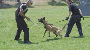 Köpek Eğitmenleri
