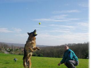 Köpek Eğitimi Bağcılar