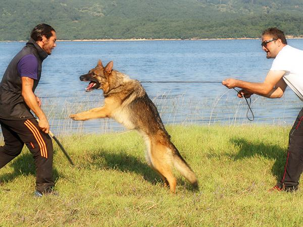 Gaziosmanpaşa Köpek Eğitim Merkezi