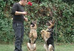 Büyükçekmece Köpek Eğitim Merkezi