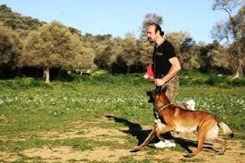 Dogo Argentino Köpek Eğitimi