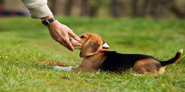 Zekeriyaköy Köpek Eğitimi