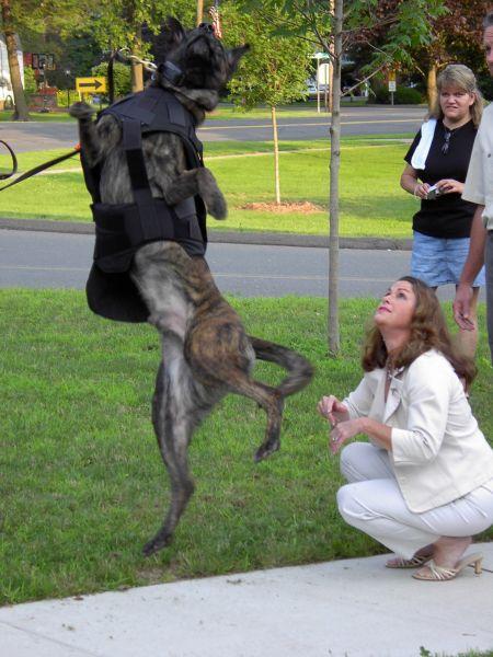 Tarabya Köpek Eğitimi