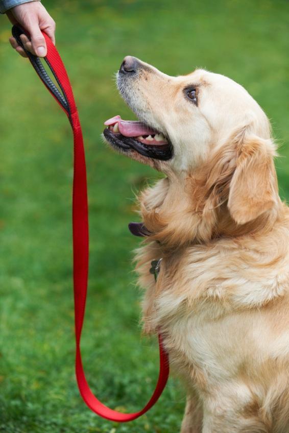 Köpek Eğitimi Esenyurt