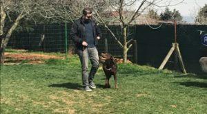İstanbul En İyi Köpek Pansiyonu