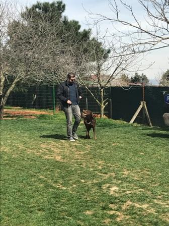 Bichon Frise Köpek Eğitimi