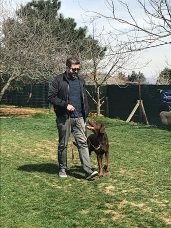 CesarMillan Yavru Köpek Eğitimi