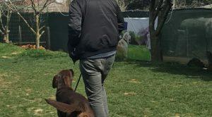 Köpek Eğitimi Bulldog İstanbul