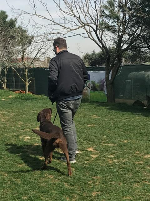Minyatür Pinscher Köpek Eğitimi