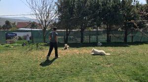 Üsküdar Köpek Eğitim Merkezi