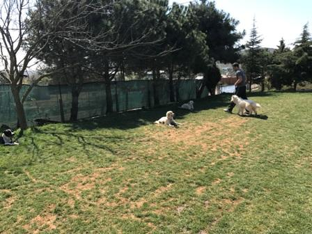 St Bernard Köpek Eğitimi Eğitmeni
