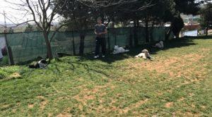 İstanbul Esenler Köpek Oteli