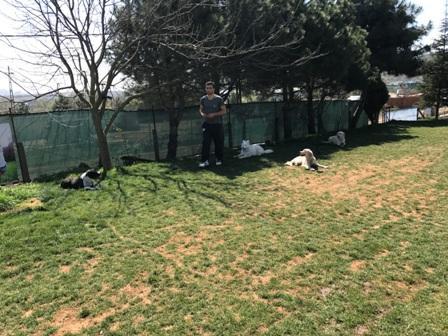 Bakırköy Köpek Pansiyonu En iyisi