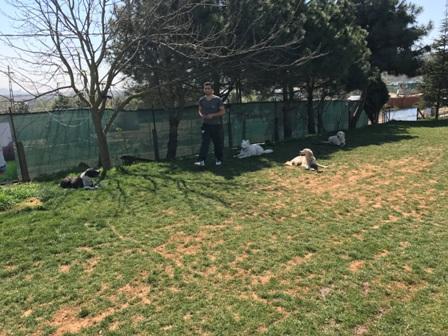 Köpek Oteli Çekmeköy İstanbul
