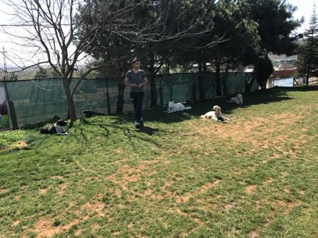 Köpek Eğitimi Bağcılar Var Mı Nerde