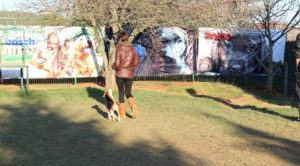 Bağcılar Köpek Pansiyonu istanbul