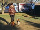 Rottweiler Eğitimi Video