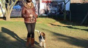 Kurzhaar Köpek Eğitimi Eğitmeni