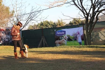 Rottweiler İtaat Eğitimi